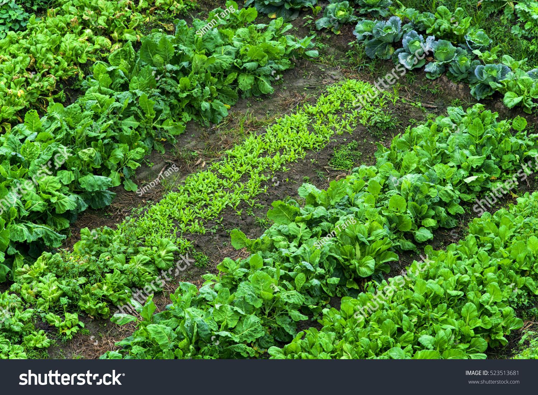 Vegetable Garden Top View