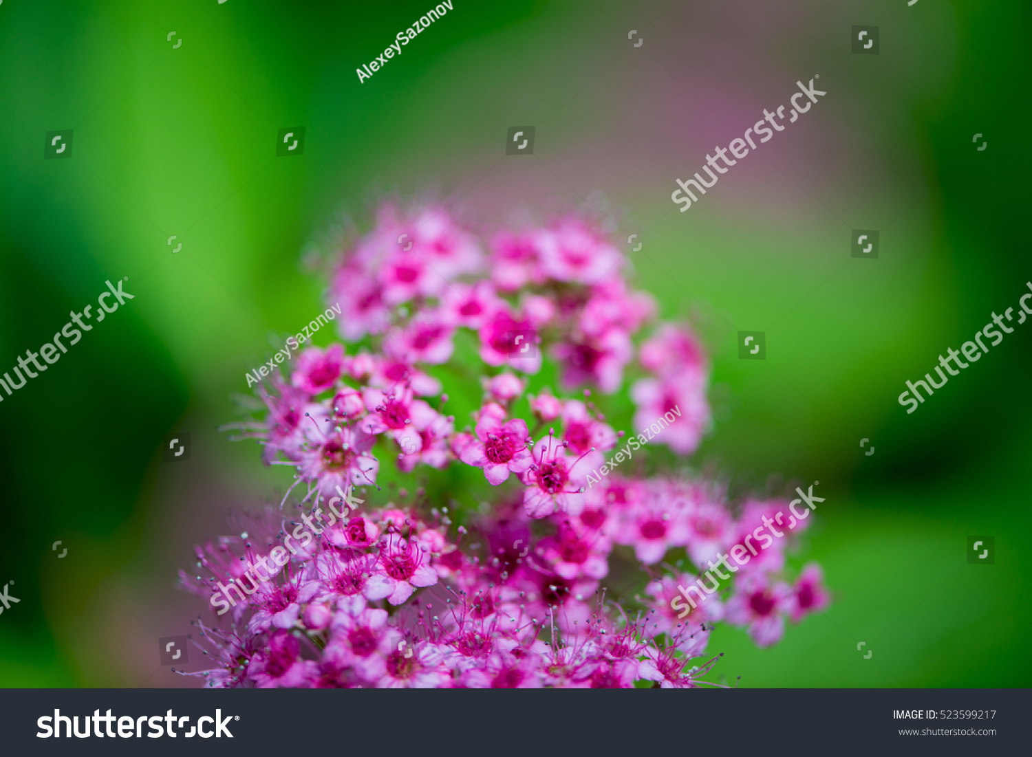 Beautiful Flowers Cards Possible Write Congratulation Stock Photo
