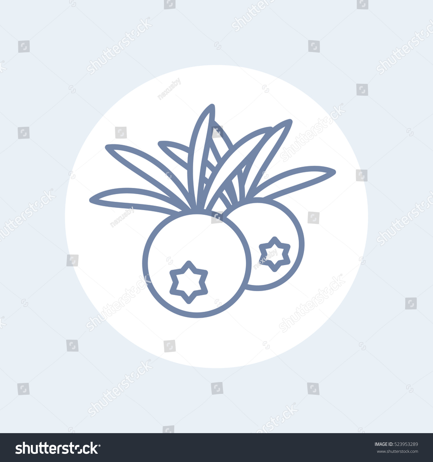 Juniper Berries Line Icon On White Stock Vector Royalty Free