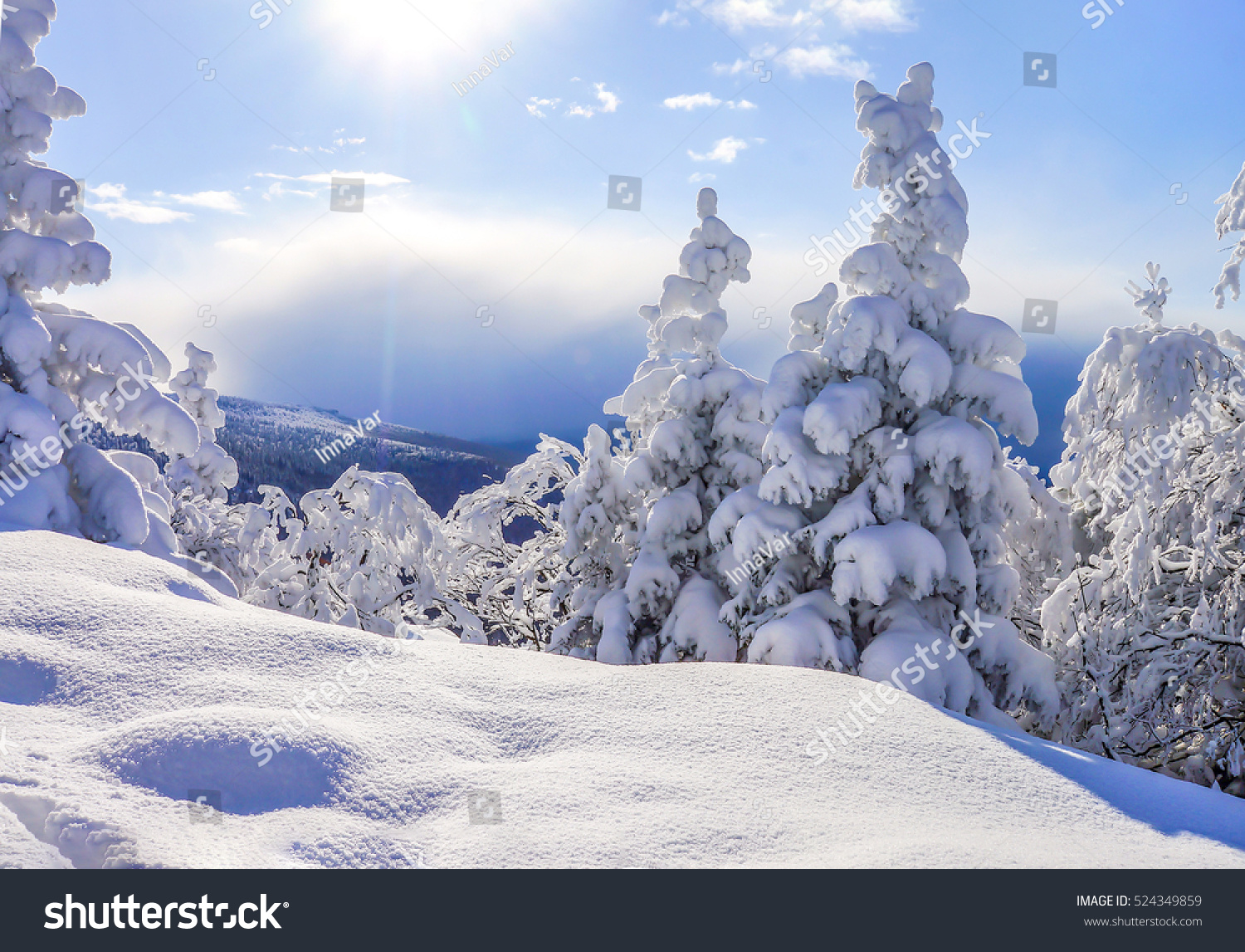 Winter nature landscape