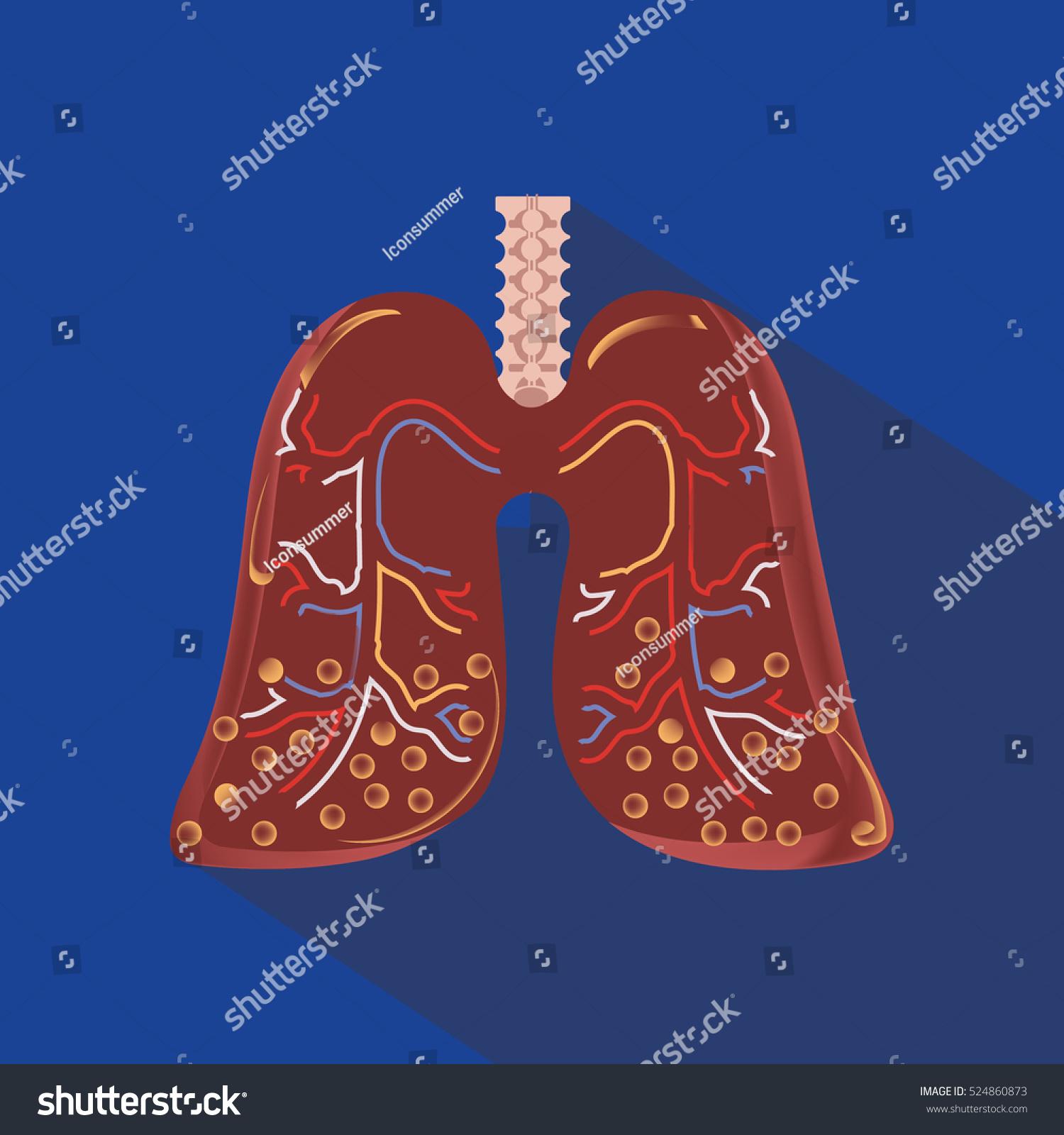 Human Lung Anatomy Diagram Stock Vector 524860873 Shutterstock
