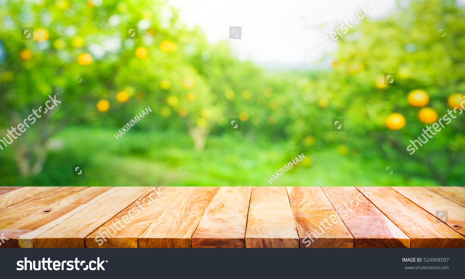 Our Orchard Design Development as well Orchard Design moreover Page 6 moreover Earth Shelter 1 besides Planning a high density apple orchard. on fruit tree orchard layout design
