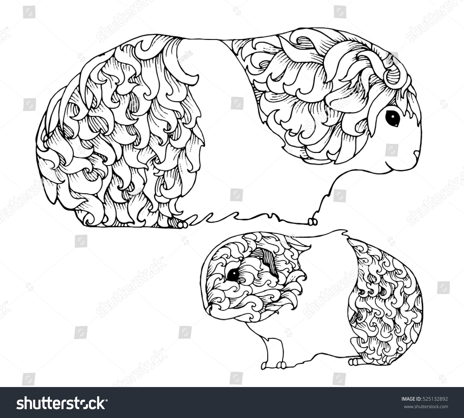 Mother Baby Guinea Pig Zentangle Page Animals Wildlife