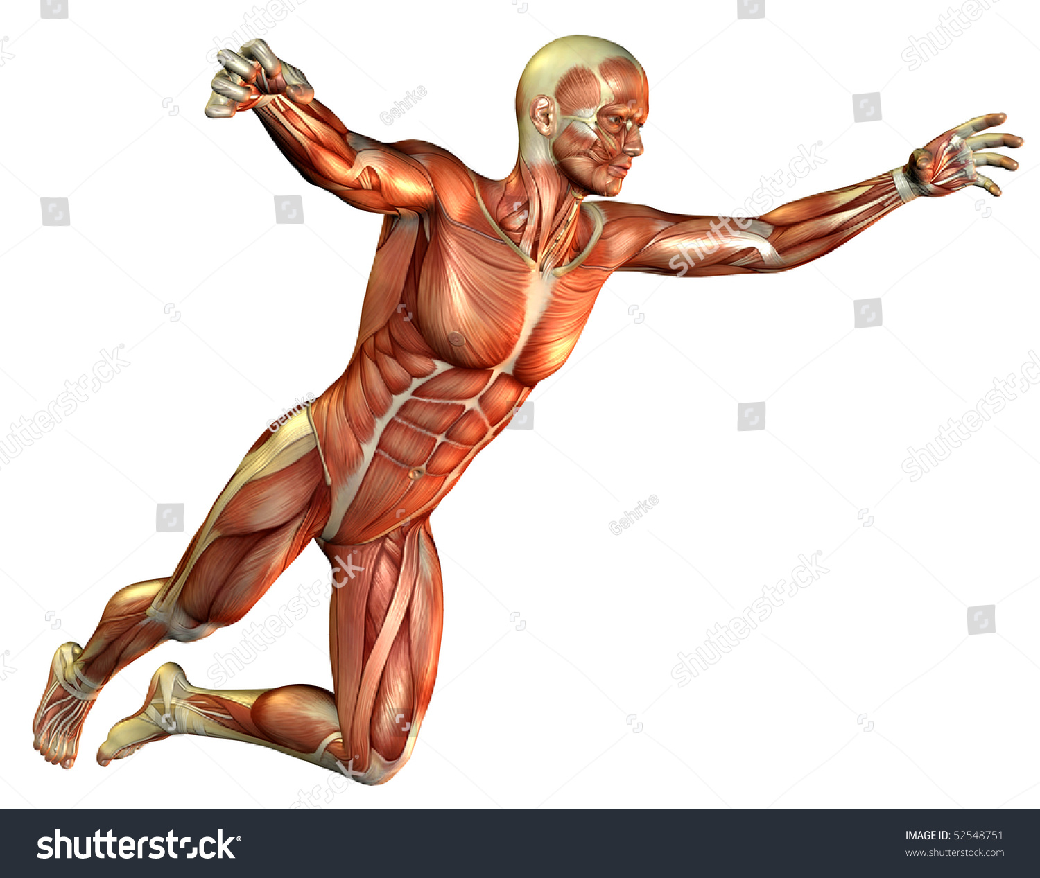 study muscle man jumping stock illustration 52548751 - shutterstock, Muscles