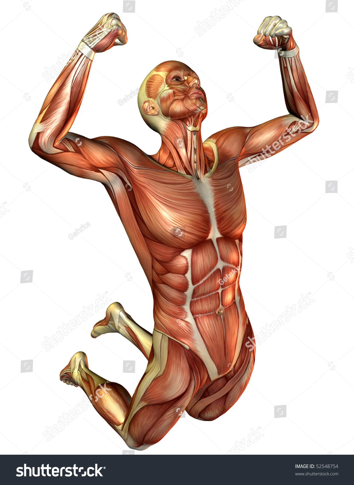 jumping man muscle study stock illustration 52548754 - shutterstock, Muscles