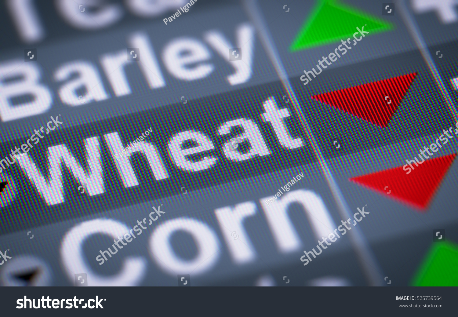 Wheat index stock market down stock illustration 525739564 wheat index of the stock market down biocorpaavc Gallery