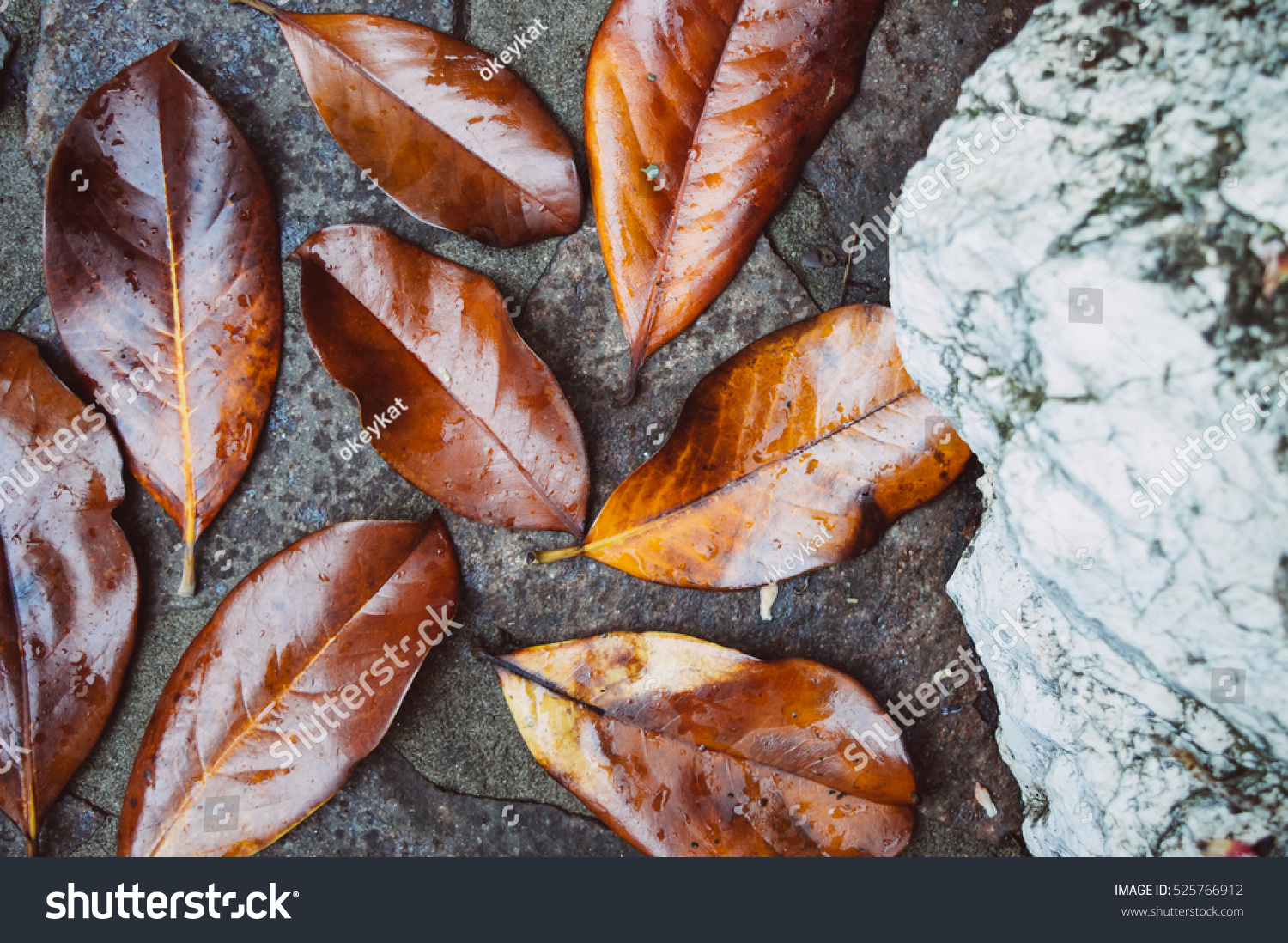 Composition Pattern Dry Orange Yellow Leaves Stock Photo Edit Now