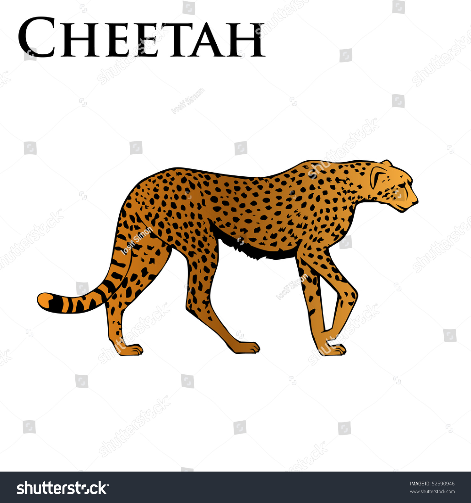 Cheetah drawings with color - photo#18