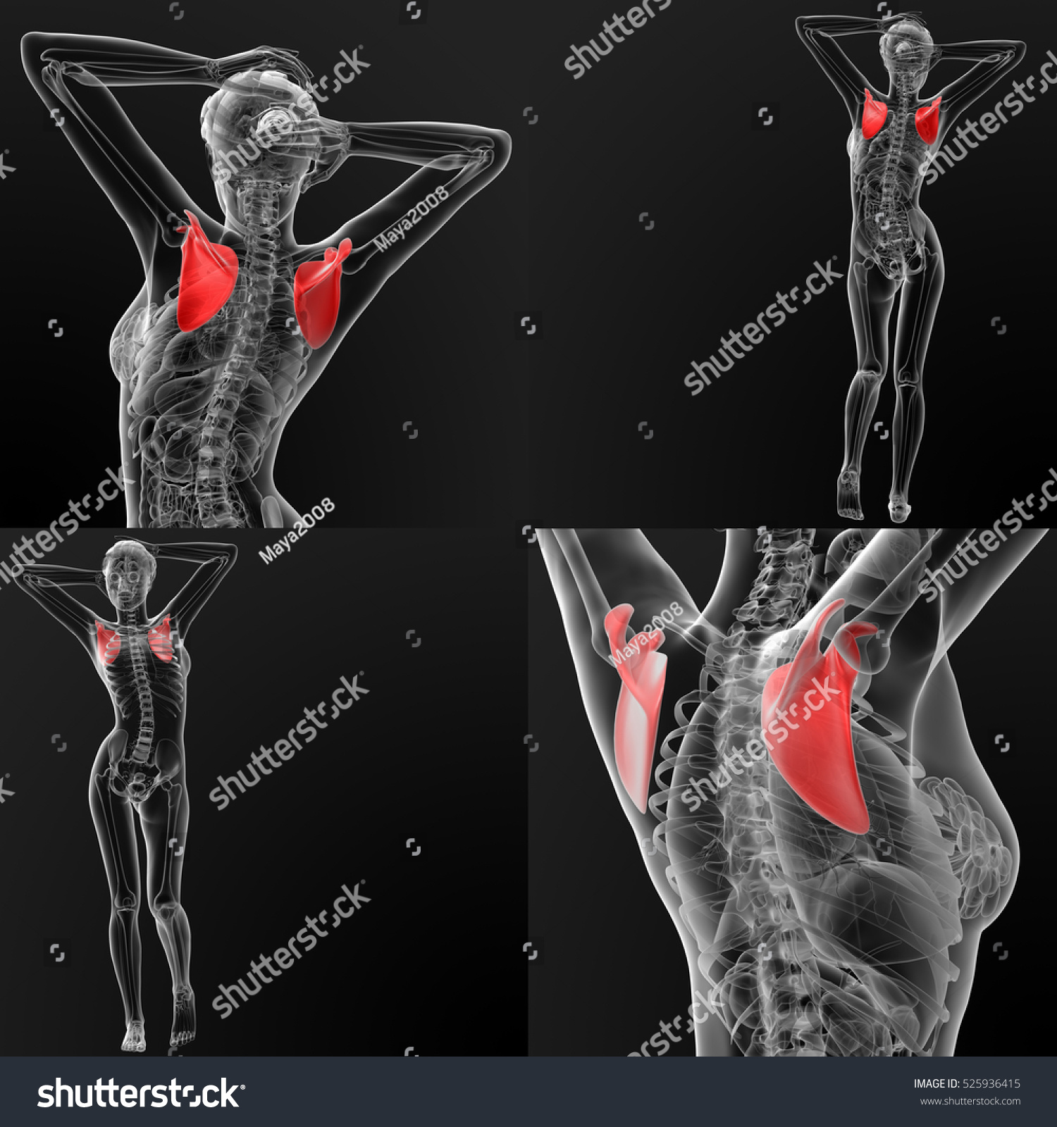 3d Rendering Illustration Of The Scapula Bone - 525936415 ...
