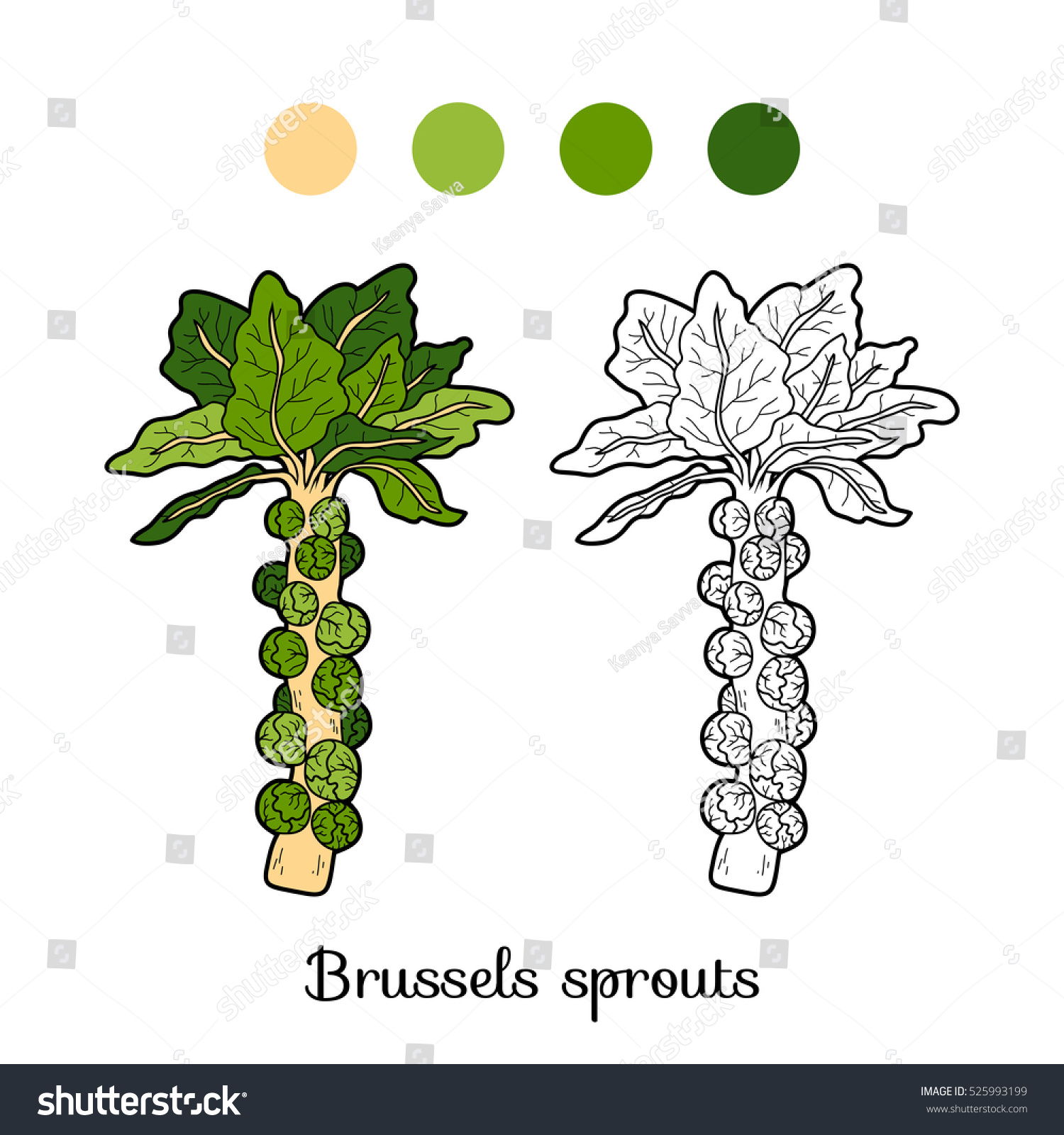 Coloring Book Children Vegetables Brussels Sprouts Stock Vector ...