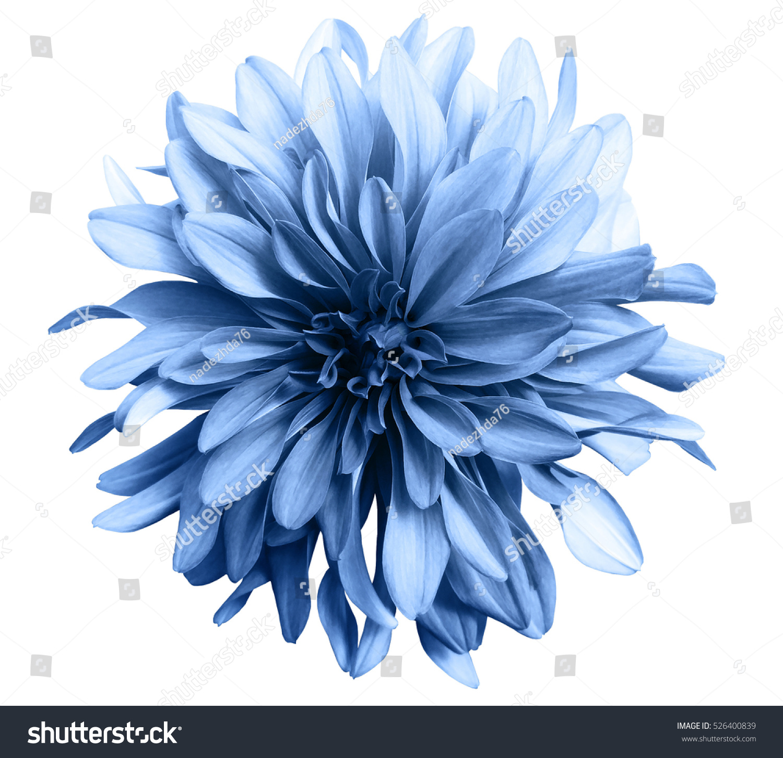 Light Blue Flower On White Background Stock Photo Edit Now