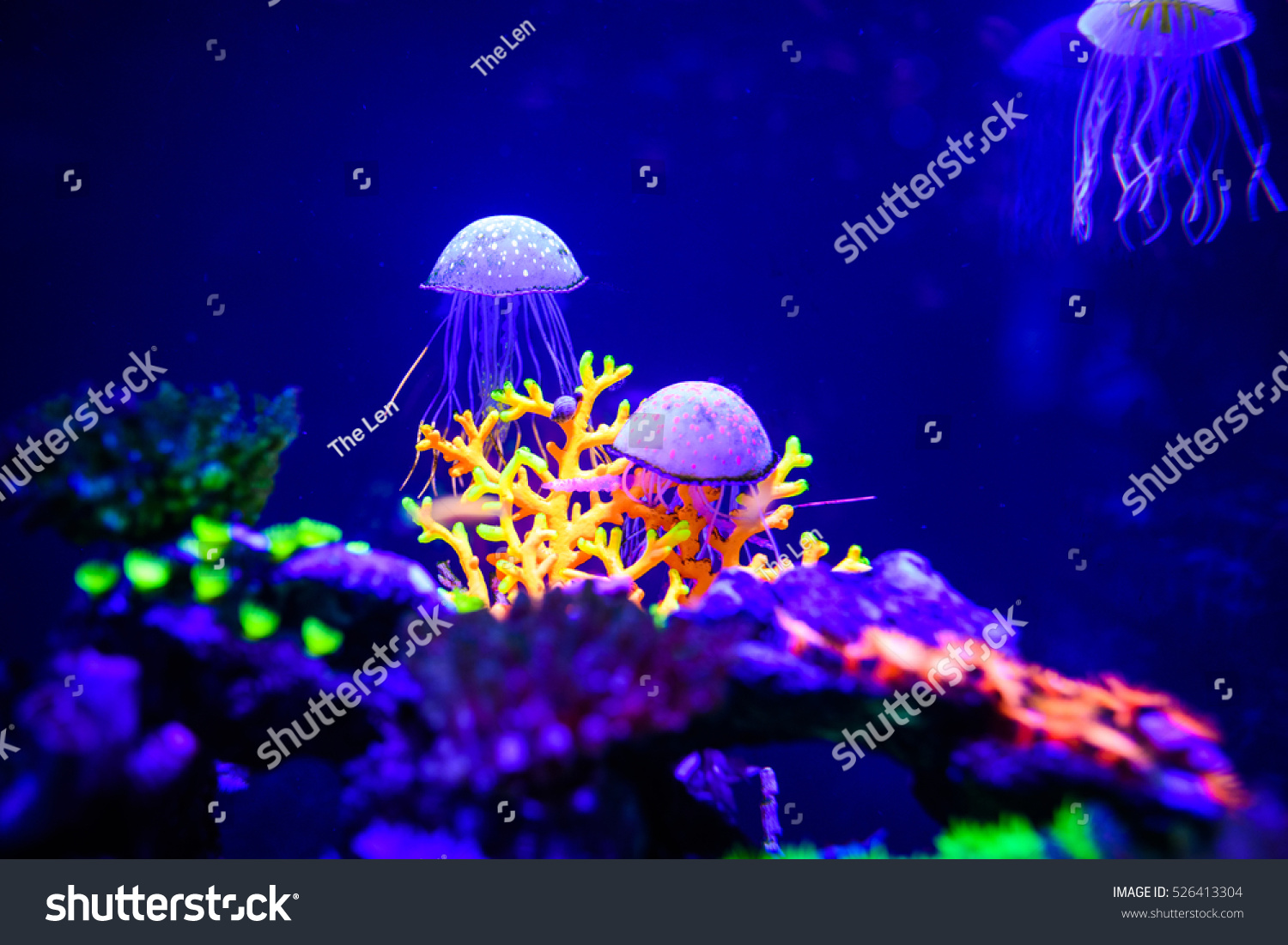 Beautiful jellyfish medusa neon light fishes stock photo for Neon aquarium