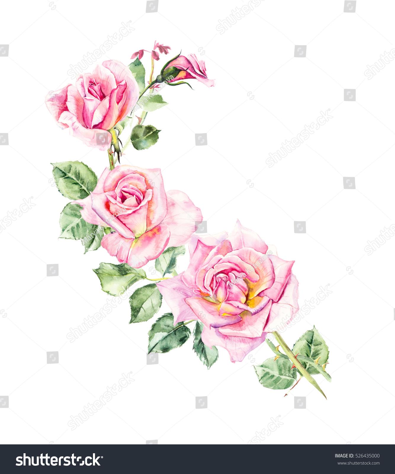 Rosebush Pattern Pink Rose Wedding Drawings Stock Illustration