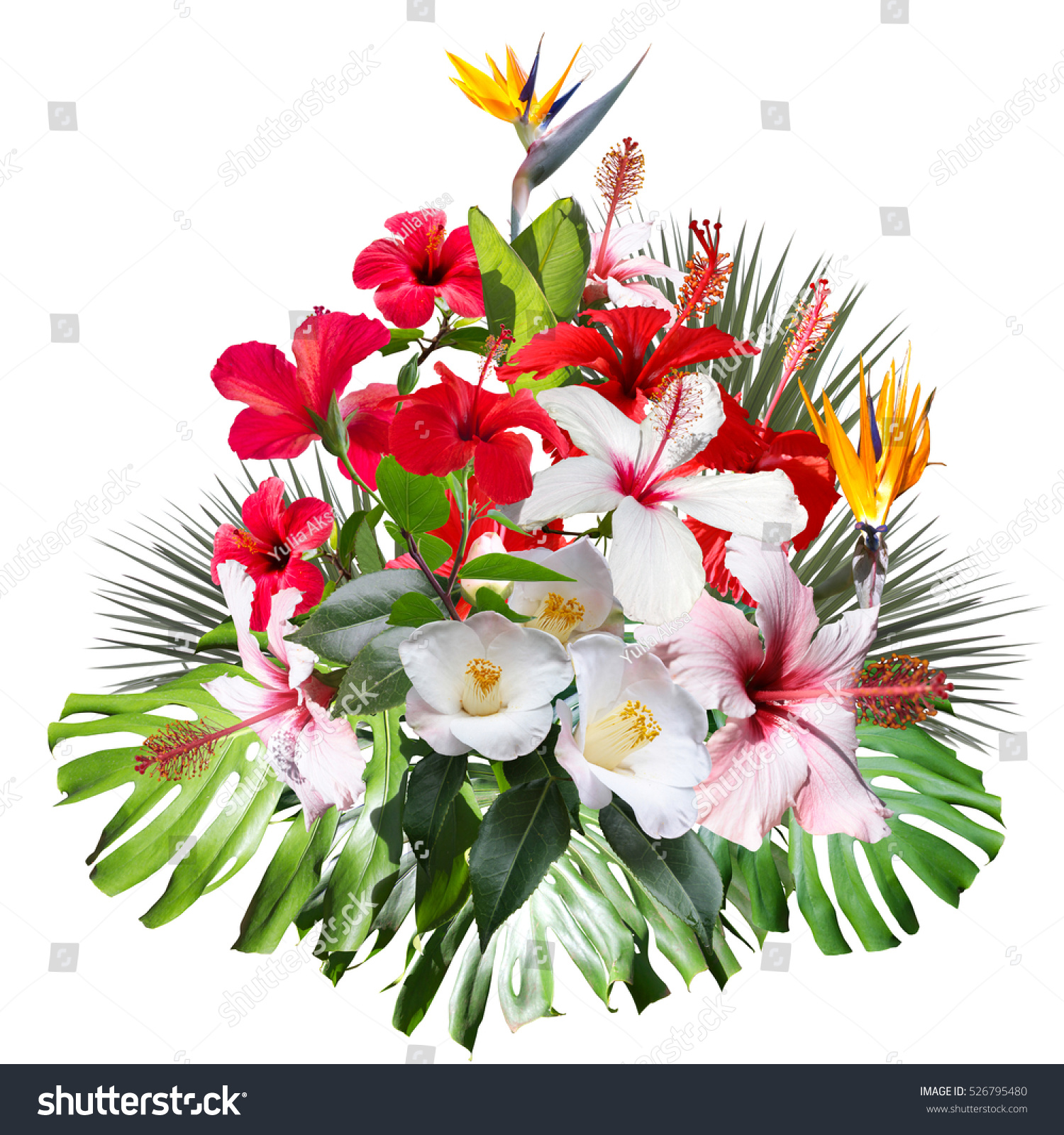 Floral Tropical Bouquet Isolated On White Stock Photo (Royalty Free ...
