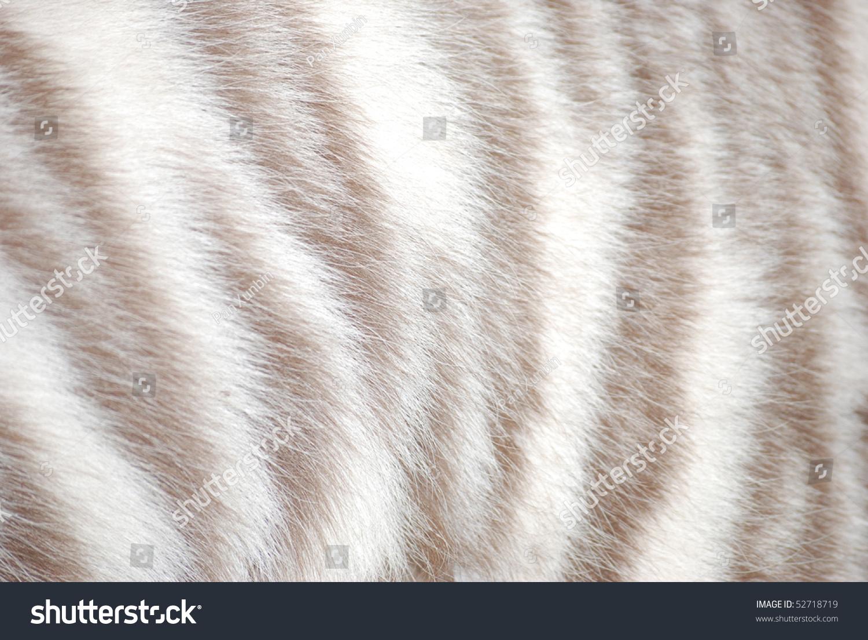 White Tiger Fur Texture Stock Photo 52718719 : Shutterstock