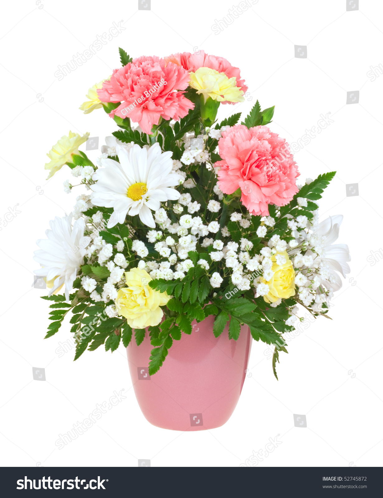 Carnation daisy babys breath flower bouquet stock photo edit now carnation daisy and babys breath flower bouquet in a pot isolated on white izmirmasajfo