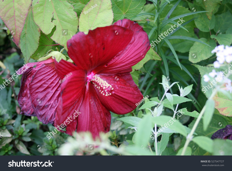 Beautiful flowers korea stock photo safe to use 527547727 beautiful flowers in korea izmirmasajfo