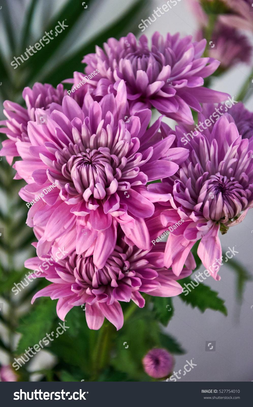 Summer Flowers Bouquet Close Up Ez Canvas