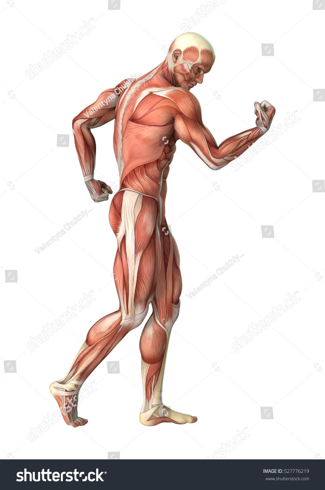 Human Body Ez Canvas