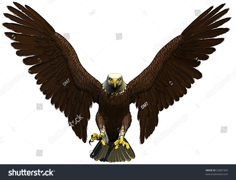Flying Hawk Front Bald Eagle Photos Diagrams Topos Summitpost Royalty Free American 52807309