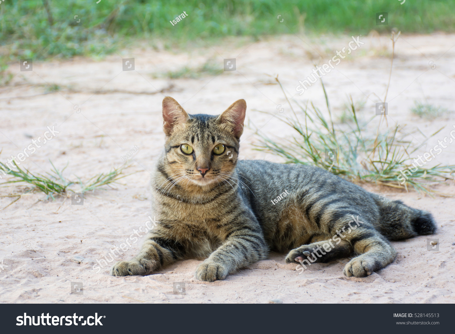 Portrait Cute Cat Stock Shutterstock