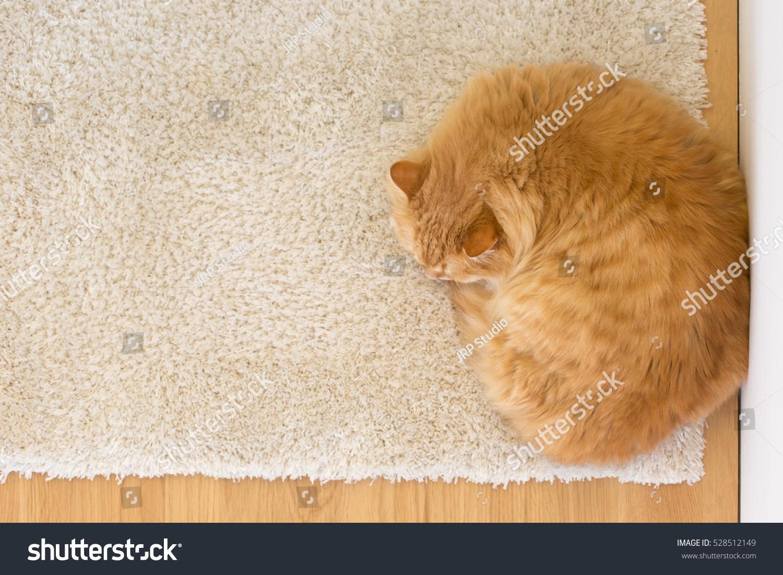Orange Cat Sleeping On The Rug