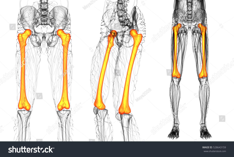 3 D Rendering Medical Illustration Femur Bone Stock Illustration