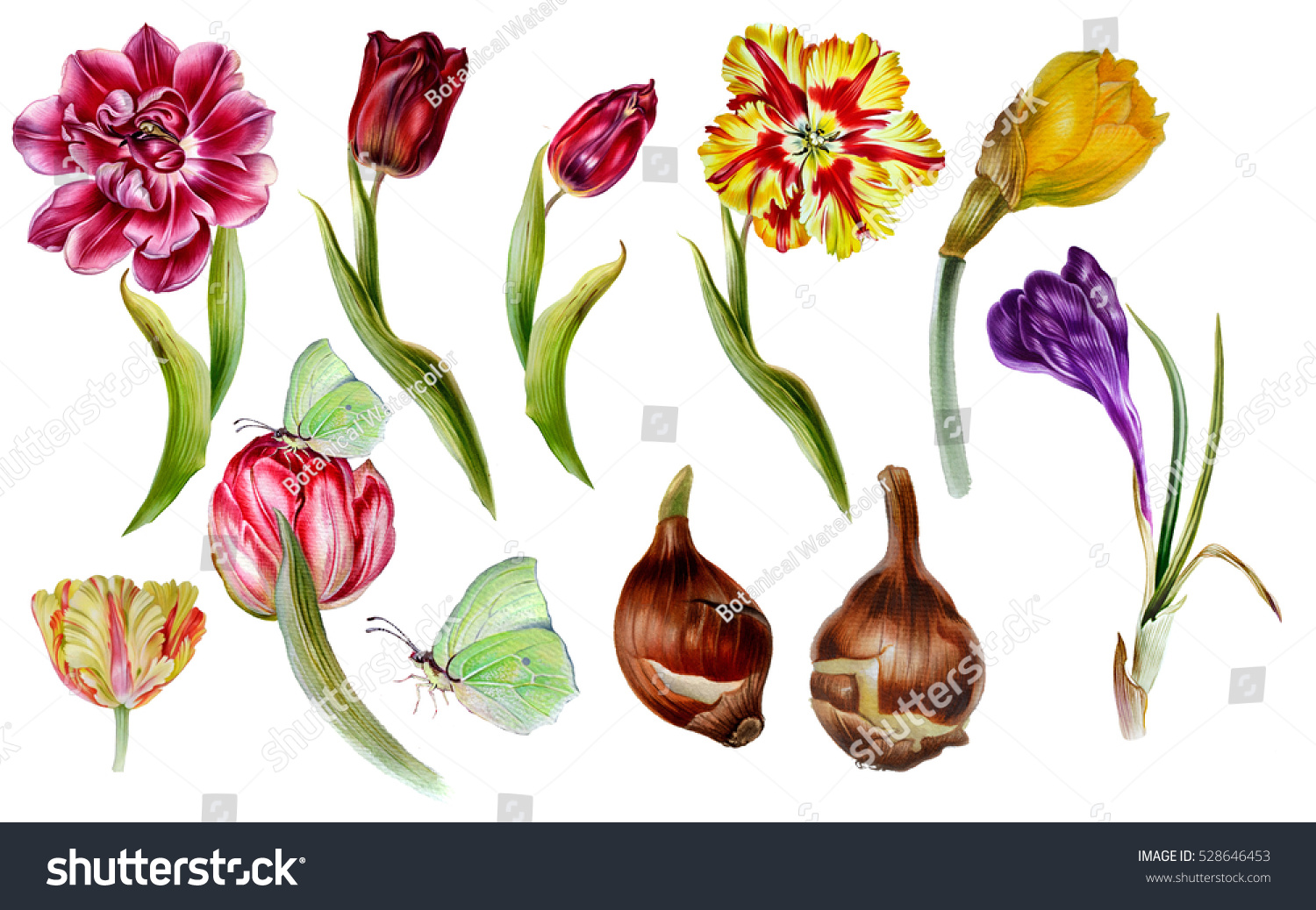 Big set of watercolor spring flowers in botanical at style tulips id 528646453 mightylinksfo