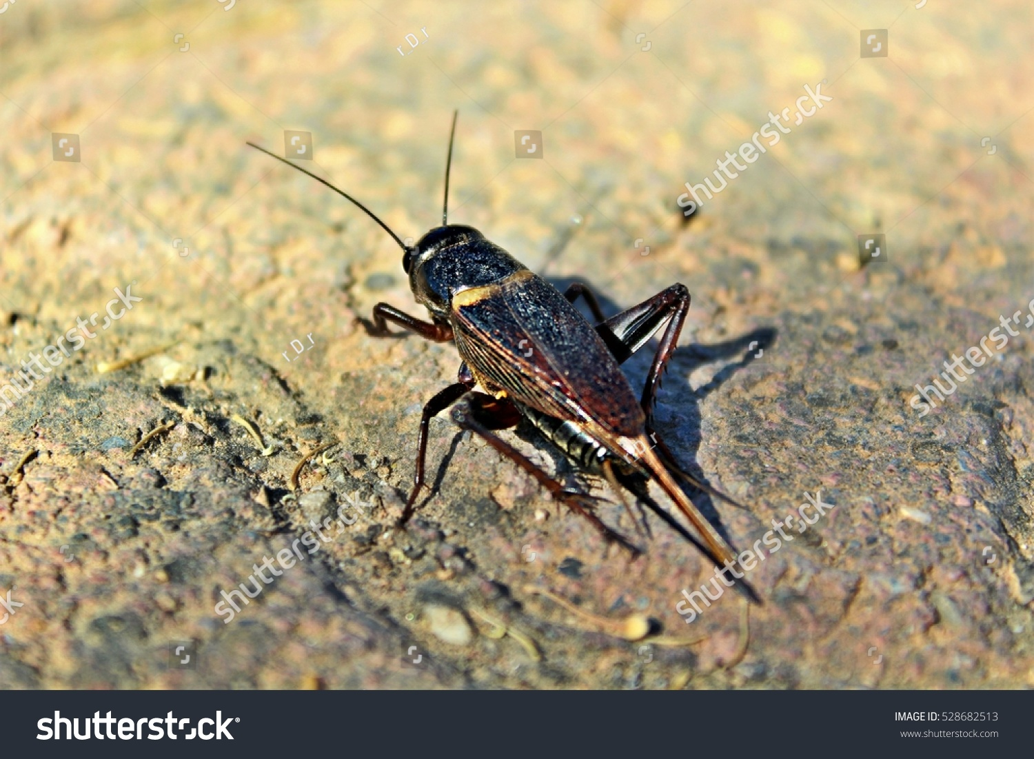 stock-photo-insect-528682513.jpg
