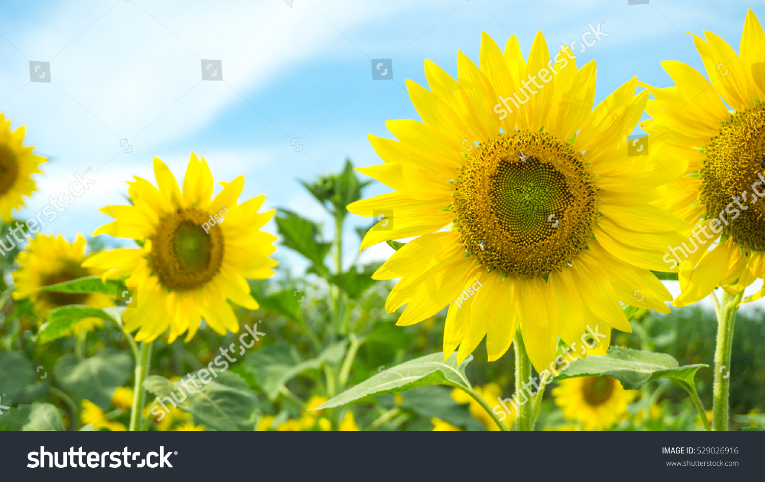 Yellow flowers and green nature concept close up beautiful id 529026916 izmirmasajfo