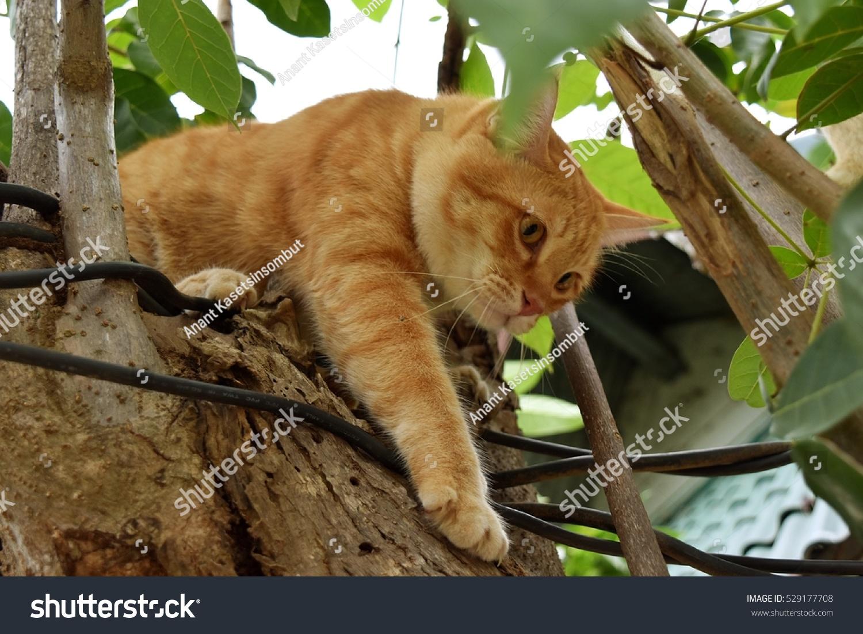 Orange Color Tabby Cat On Tree Stock Photo Edit Now 529177708