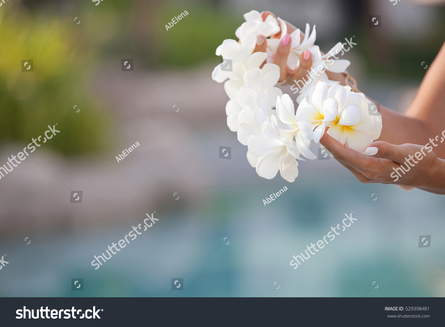 Woman hands holding flower lei garland of white plumeria welcoming id 529398481 izmirmasajfo