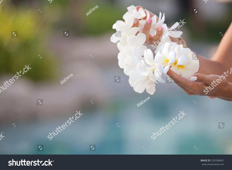 Woman hands holding flower lei garland of white plumeria welcoming id 529398481 izmirmasajfo