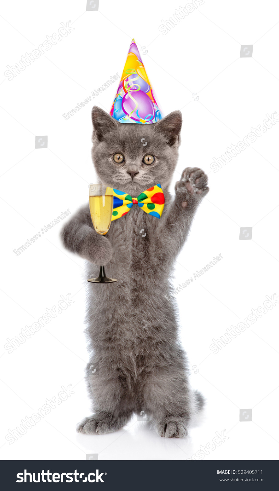 Happy Cat In Birthday Hat Holding Glass Of Champagne Isolated On White Background