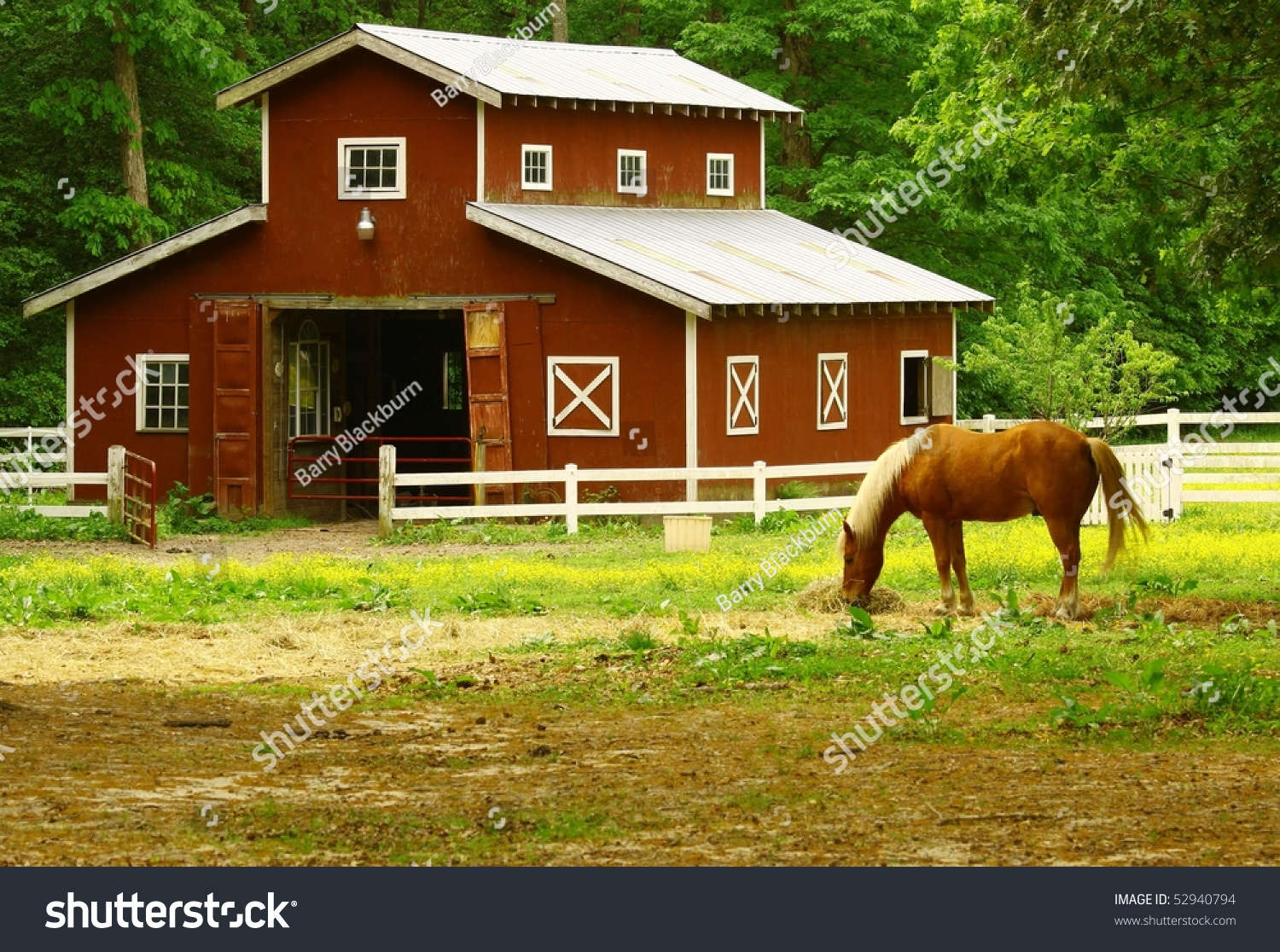 Old Horse Barn Horse Eating Straw Stock Photo 52940794