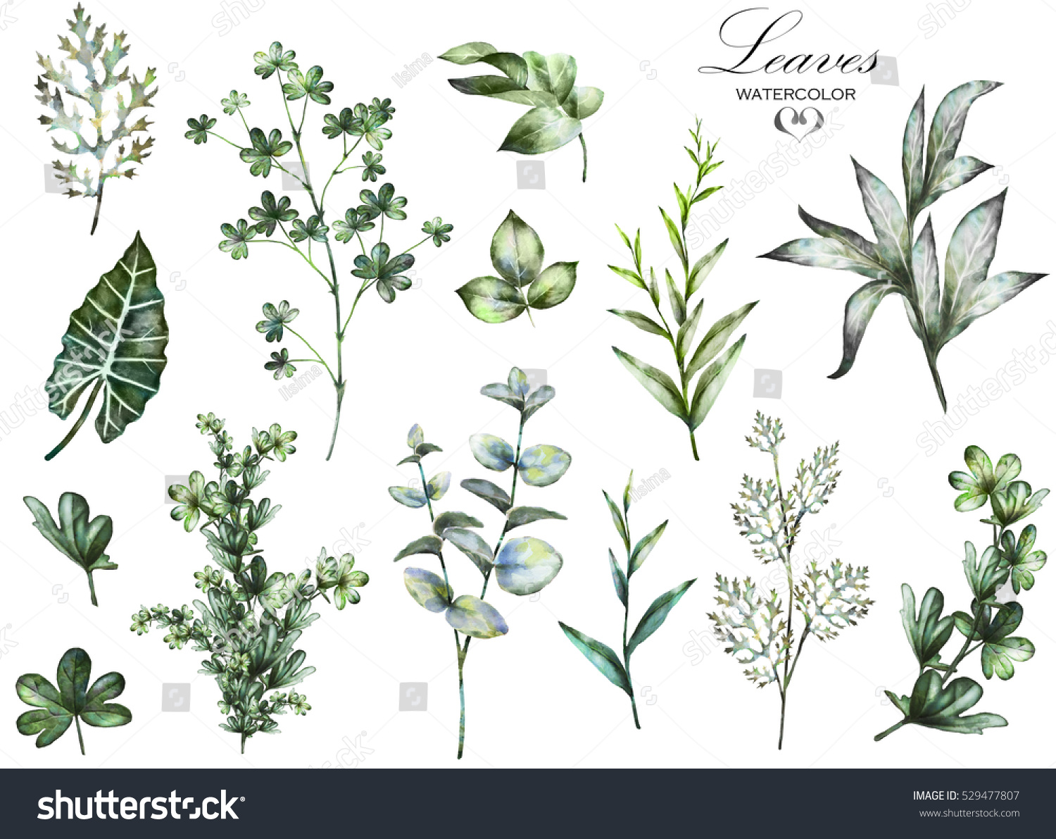 Wild Backyard Herbs : Set watercolor elements  herbs, leaf collection garden and wild herb