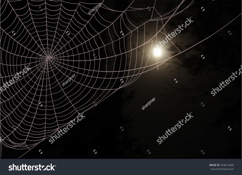 Обои Spider, паутина, мрак, паук. Разное foto 17