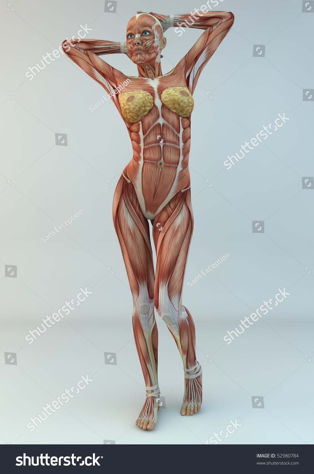 Anatomy Woman Medicine Study Photorealistic Renderer Stock ...