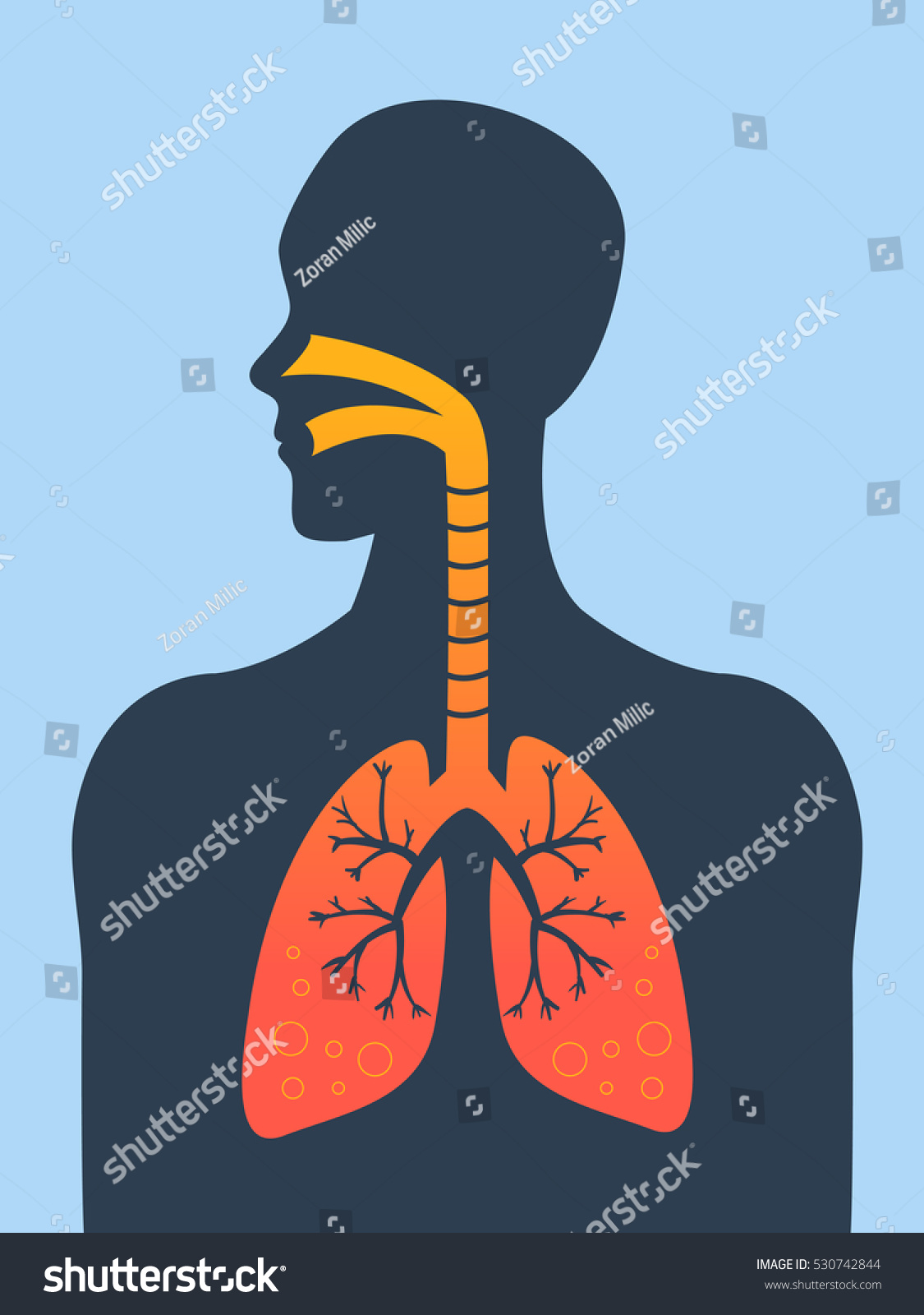 Human Silhouette Inflamed Respiratory System Lungs Stock Vector ...