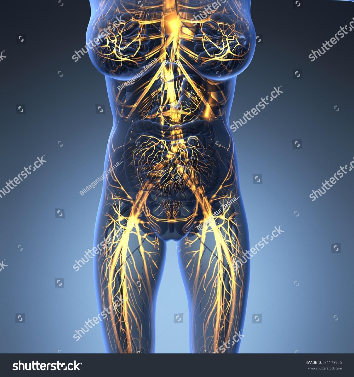 Science Anatomy Human Body Xray Glow Stock Illustration 531173926