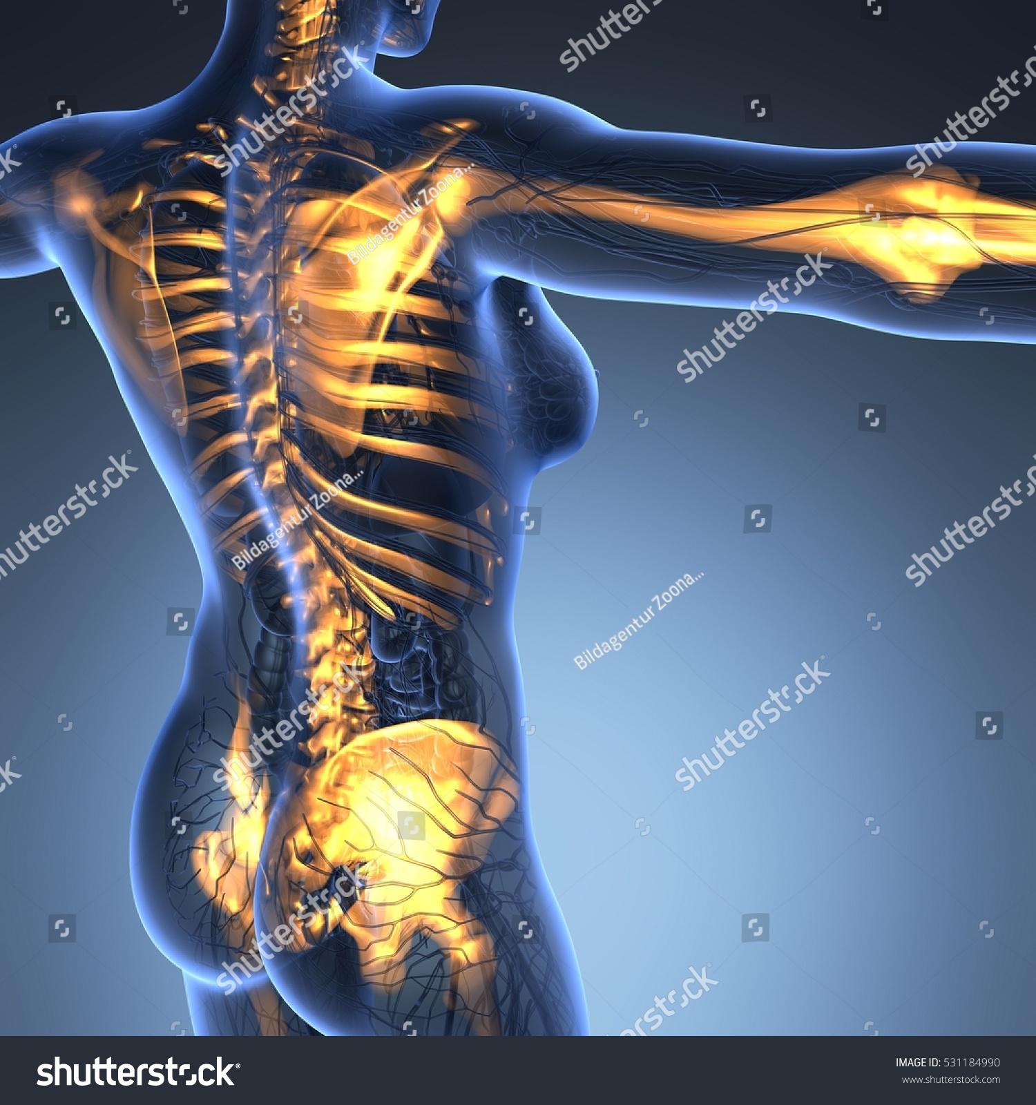 Science Anatomy Human Body Xray Glow Stock Illustration Royalty