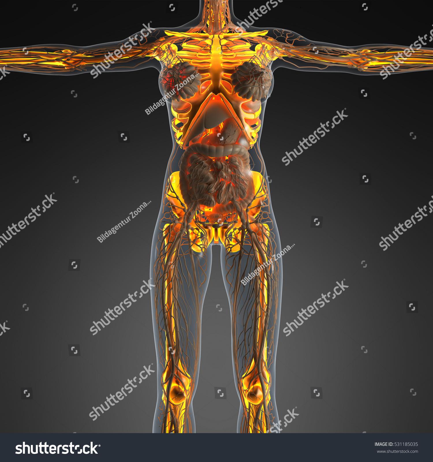 Science Anatomy Human Body Xray Glow Stock Illustration 531185035