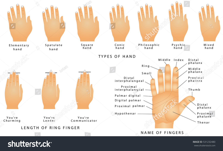 names fingers types hands types hands のベクター画像素材