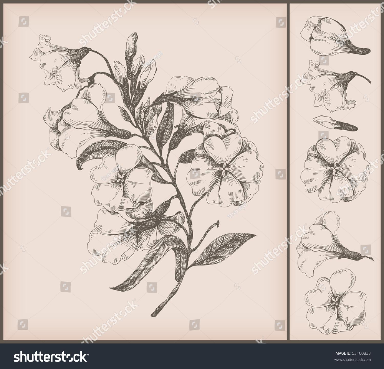 Vintage Flower Drawing 107
