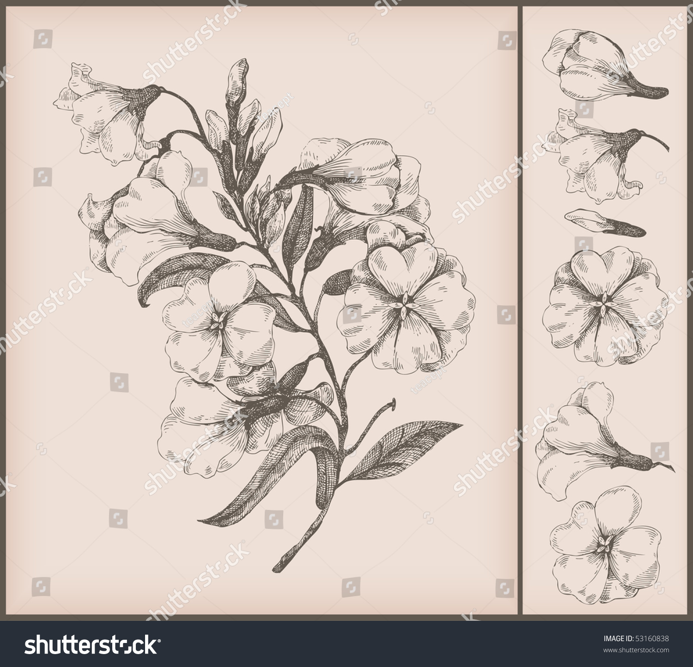 Flower Line Drawing Vintage : Vintage flower drawing stock vector shutterstock