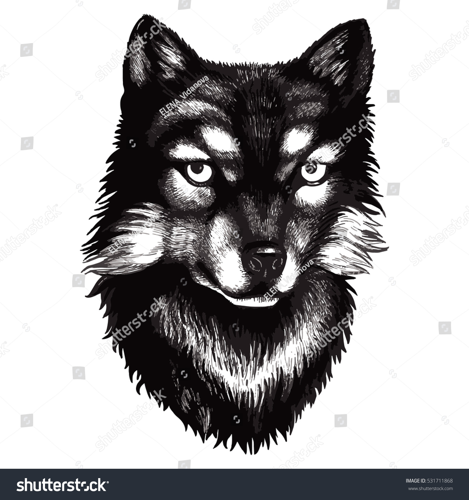 Vector sketch detailed face wolfs black and white isolated wolf illustration can be
