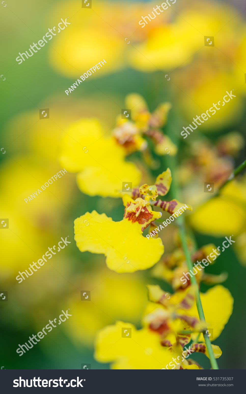 Yellow Flowers Selective Soft Focuse Boke Stock Photo Edit Now