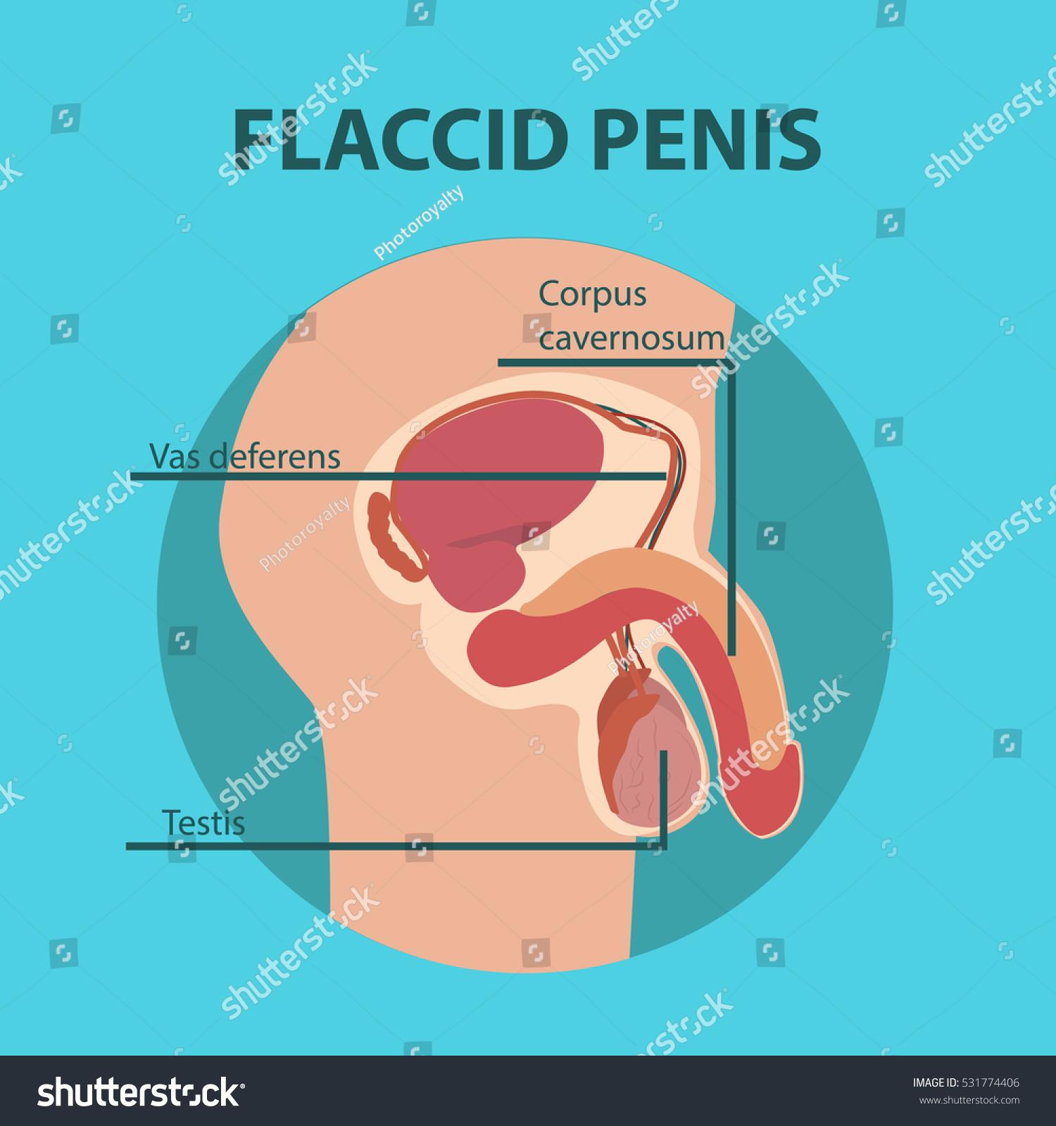 Flaccid sex