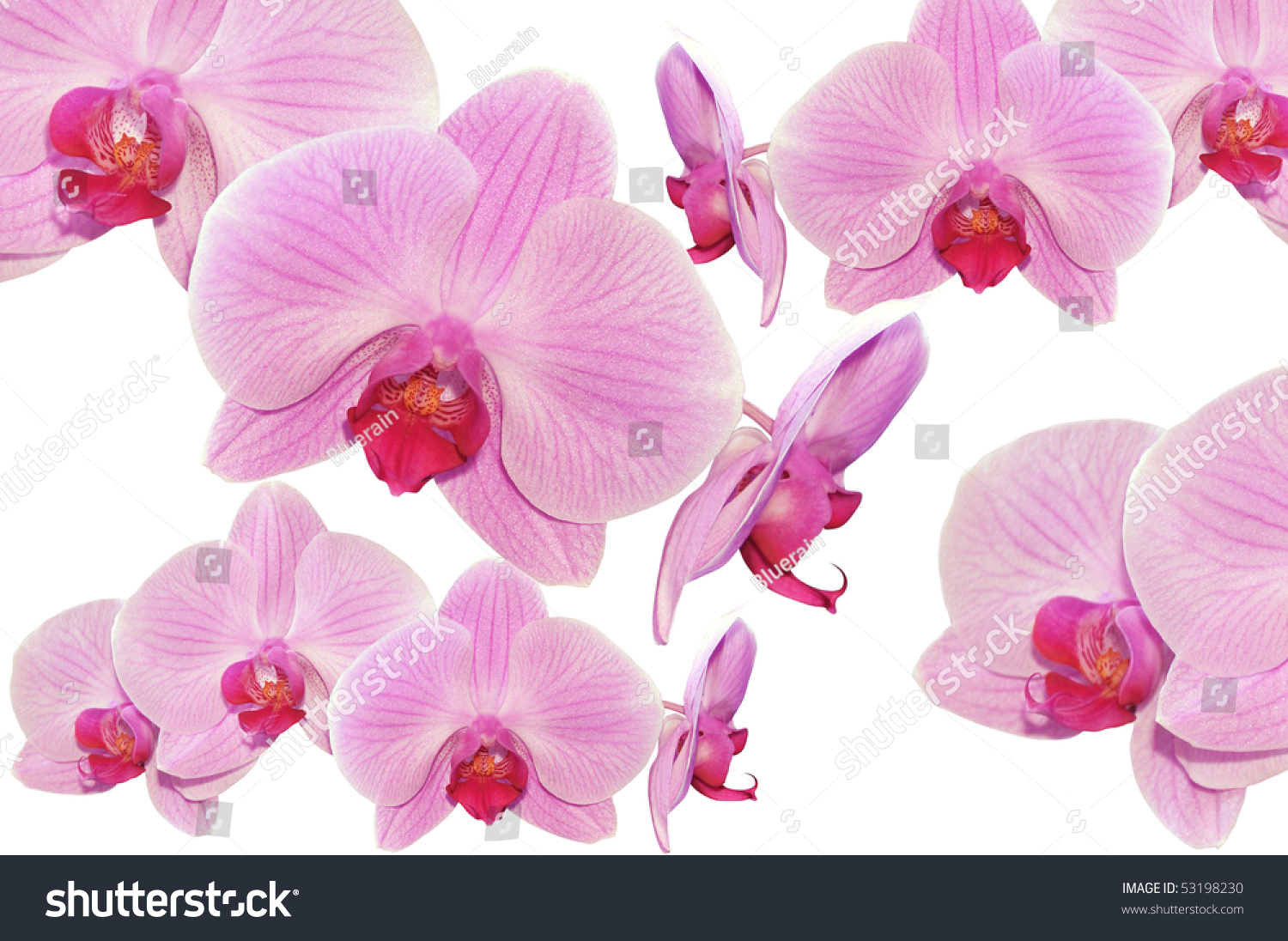 Floral Design Pink Orchids Flowers Isolated Stock Photo Edit Now