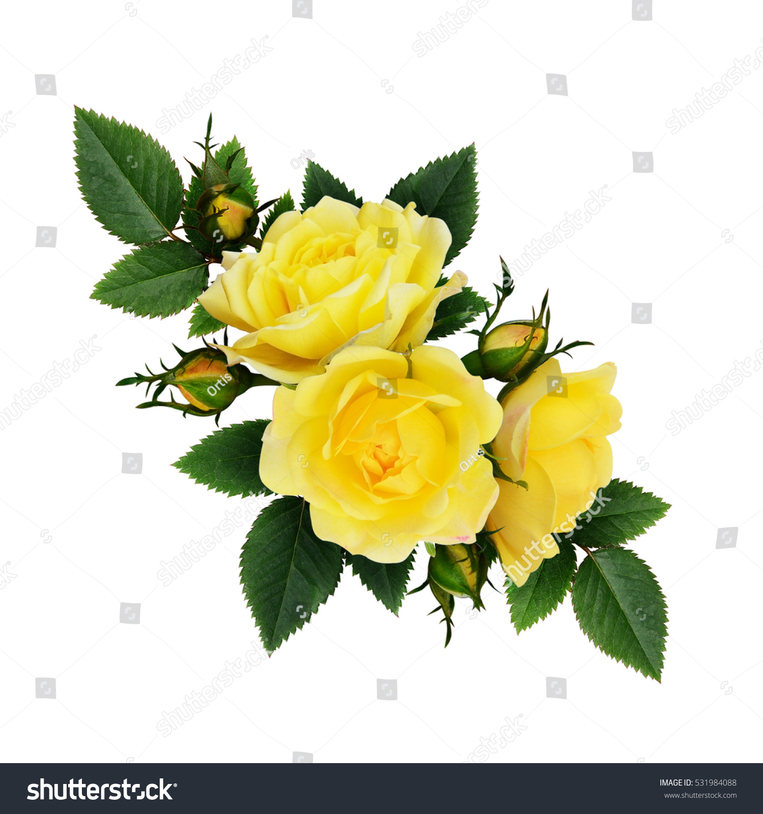 yellow rose flowers composition isolated on stock photo (safe to use